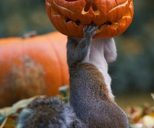 Halloween, squirrel, and funny image
