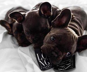 amour, animal, and dog image