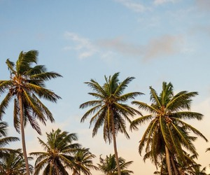 clouds, ocean, and palm trees image