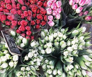 bright, flowers, and tulips image
