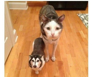 cat, dog, and faceswap image