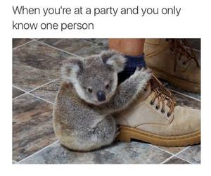 funny, party, and Koala image