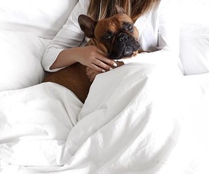bed, french bulldog, and love image