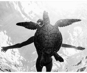 turtle, sea, and black and white image