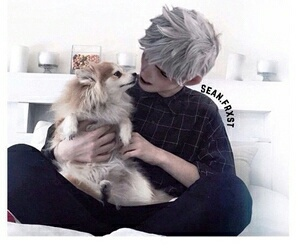 dog, jack frost, and modern image