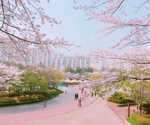 asia, spring, and cherry blossoms image