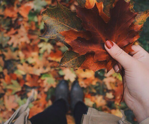 autumn, colors, and leafs image