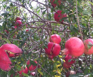 fruta, rojas, and natural image