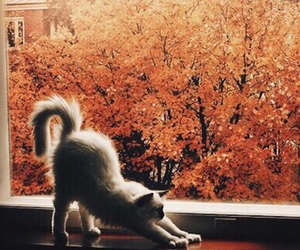 autumn, view, and cat image