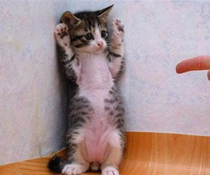 cat, funny, and kitten image