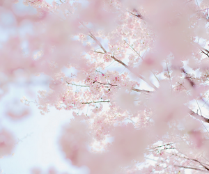 flowers, lovely, and pink image