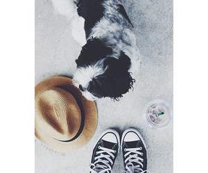 converse, dog, and puppy image