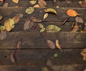 autumn, crispy, and leaves image