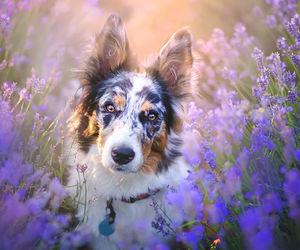 animals, beautiful, and dogs image