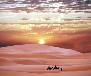 camels, desert, and sunset image