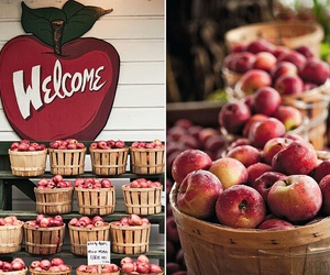 apple, fall, and welcome image