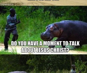 funny, lol, and hippo image