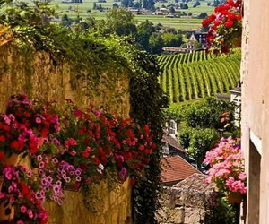france, flowers, and nature image