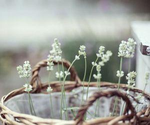 alternative, flower, and lovely image