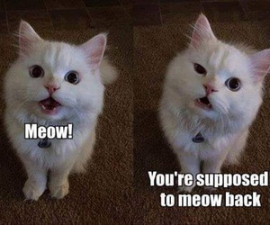 cat, funny animals, and kitty image