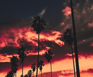 sky, sunset, and palms image