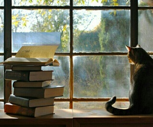books, cat, and summer image
