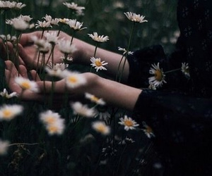 flowers, grunge, and daisy image