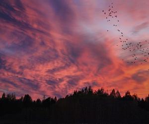 sky, clouds, and bird image
