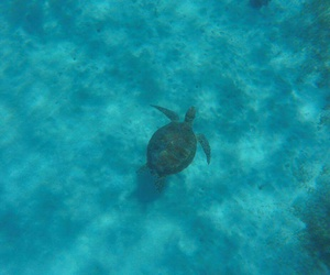 turtles and gopro image