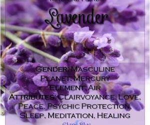 lavender and herbalism image