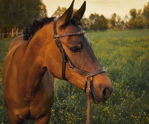 beautiful, bridle, and country image