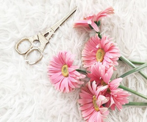 flowers, pink, and scissors image