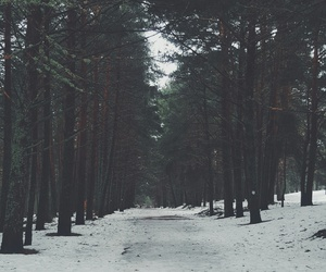 black, snow, and forest image
