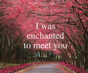 enchanted, Taylor Swift, and quote image