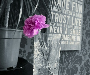 blacknwhite, carnation, and pinkflowers image