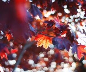 autumn, leaves, and mushrooms image