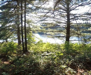 earth, green, and algonquin image