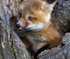 explore, nature, and cute baby animal image