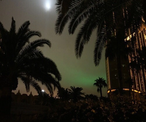 night, palms, and lights image