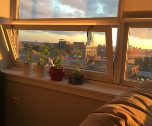 aesthetic, plants, and sunset image