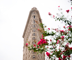 flatiron building, flowers, and new york image