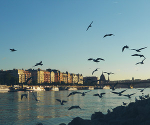 budapest, danube, and seagull image