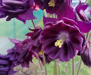 flower, purple, and nature image