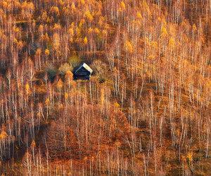 autumn, inspiration, and wanderlust image