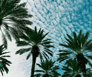 blue, tropical, and palm image