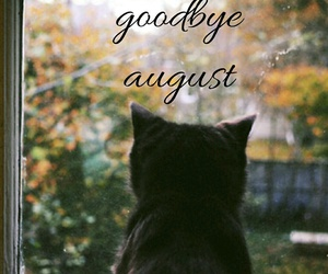 August, autumn, and cat image