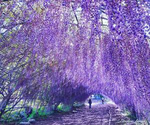 beautiful, place, and purple image