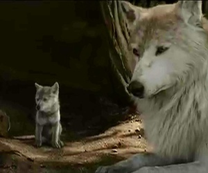 jungle book and wolf image