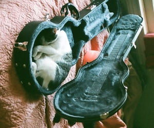 cat, guitar, and vintage image