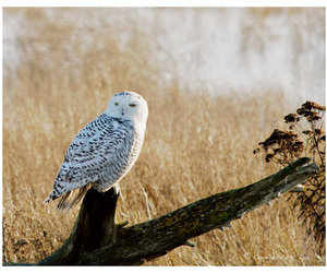 animals, photography, and owl image